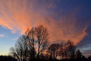 Himmel och träd